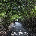 高雄自助婚紗推薦外拍景點:海灘綠色隧道