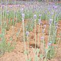 南投-2007花卉博覽會
