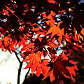 -  Kyushu Fall  -