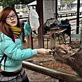 10天日本關西蜜月旅行>奈良+大阪海遊館