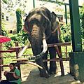ChiangMai-zoo