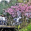 三峽熊空休閒茶園2015.2.22