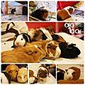 20091011-鼠兔聚