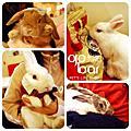 20091220-鼠兔聚 趴兔