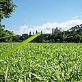 青年公園與植物園、大安公園