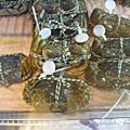 951117吃大閘蟹
