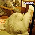 南島夢遊with摳摳 2011/08/15