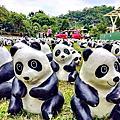 員山鄉湖山國小~一千六百隻貓熊來訪~宜蘭民宿小管家葛瑞絲~