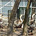 2008.03.02~壓遍雲林之海湖港灣