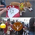 狗狗奧運會