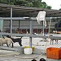 台灣動物保護協會