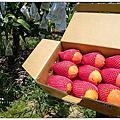 水蜜桃芒果