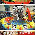 6.22桃樂絲游泳party