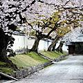 [旅遊]京都。櫻。1