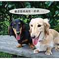 20090214碧潭情人節