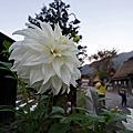 2014 名古屋全家自助游(四):合掌村