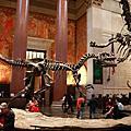 美國自然歷史博物館(American Museum of Natural History)