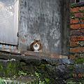 侯硐貓咪街道