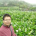 413竹子湖