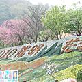 20100227陽明山賞花