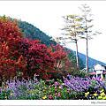 2010十一月武陵