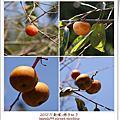 201211新埔柿餅節