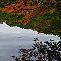 白神山地|日本世界遺產