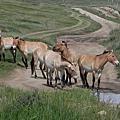 Hustai NP 哈斯台國家公園