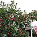 日本蘋果園