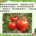 番茄系列(七)
