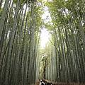 2011-京都之旅-第六天-嵯峨野 嵐山