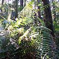 forest_bio2