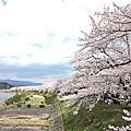 2016 日本東北追櫻之旅