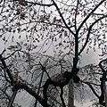 2013.03.14 F1班白色情人節校外教學 小石川後楽園