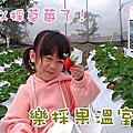 【新景點】彰化可以採草莓了★樂採果溫室農場★無農藥草莓 + 福寶乳牛彩繪村一日遊
