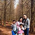 桃園市八德區-八德落羽松森林-冬季的另一種美(20190131)