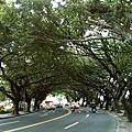 台北最有樹意的一景
