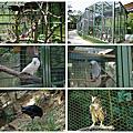 1040116楊梅森林鳥花園