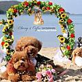 很 cute 的狗狗婚紗照