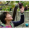 2006 苗栗五穀及彰化採葡萄
