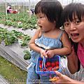 20120309-[台北] 內湖-採草莓
