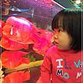 20121109-[台北] 南港-觀賞魚博覽會