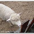 2011.3.31-4/2清境小旅行 WEB