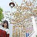 2018.03~新竹景點。新竹三民公園(新竹賞木棉花景點)