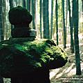 這是日本的綠