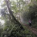 探訪黑暗部落-大禮大同步道一日行