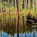 台灣-南投-忘憂森林-合歡山-清境農場-銅梁火龍