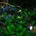 台灣-三峽-有木國小螢火蟲