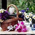 花朵最迷---♡♡