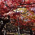 2013.11.17~23日本關西自助遊